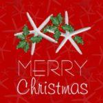 Starfish and Holly Holiday Card Design